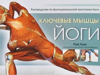 Ключевые мышцы йоги